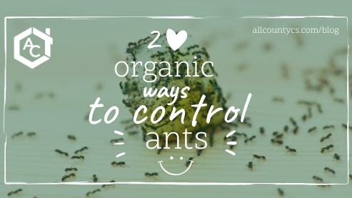 2 Organic Ways to Control Ants
